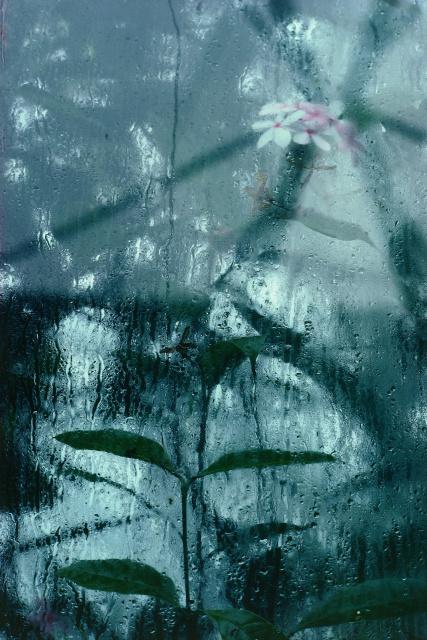 Réflexions dans un jardin 2