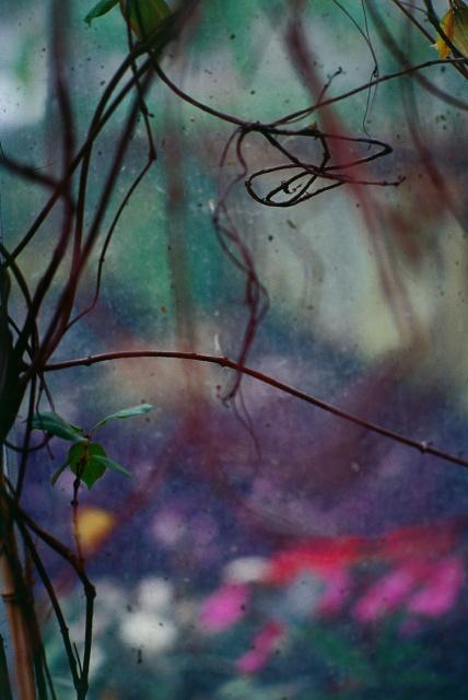 Réflexions dans un jardin 5