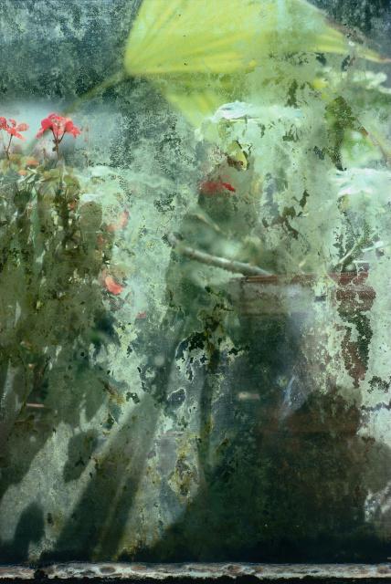 Réflexions dans un jardin 7